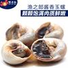 渔之郎玉螺酱香螺东港特产丹东贝类开袋即食海鲜零食150g