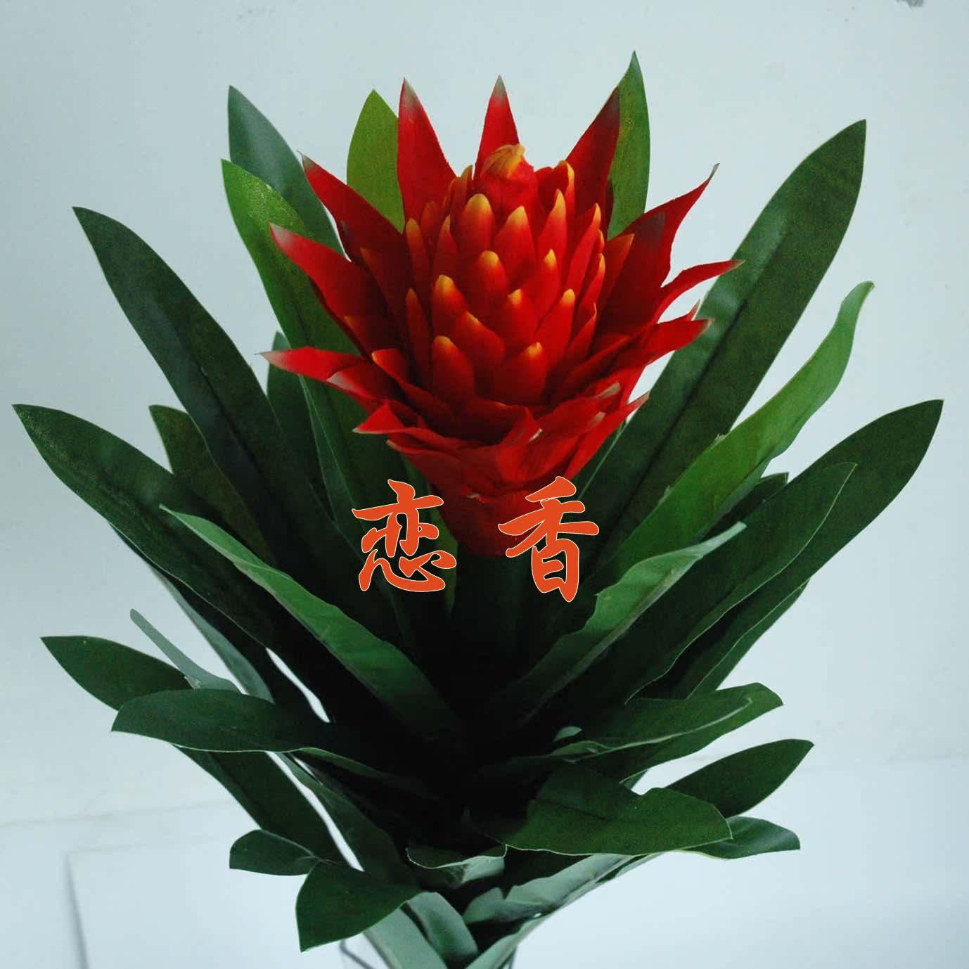 【恋香】鸿运当头 单头红 凤梨 火炬 红运当头红花仿真树植物盆景