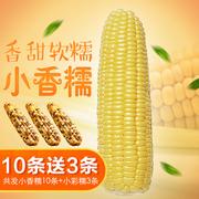 新鲜甜糯玉米